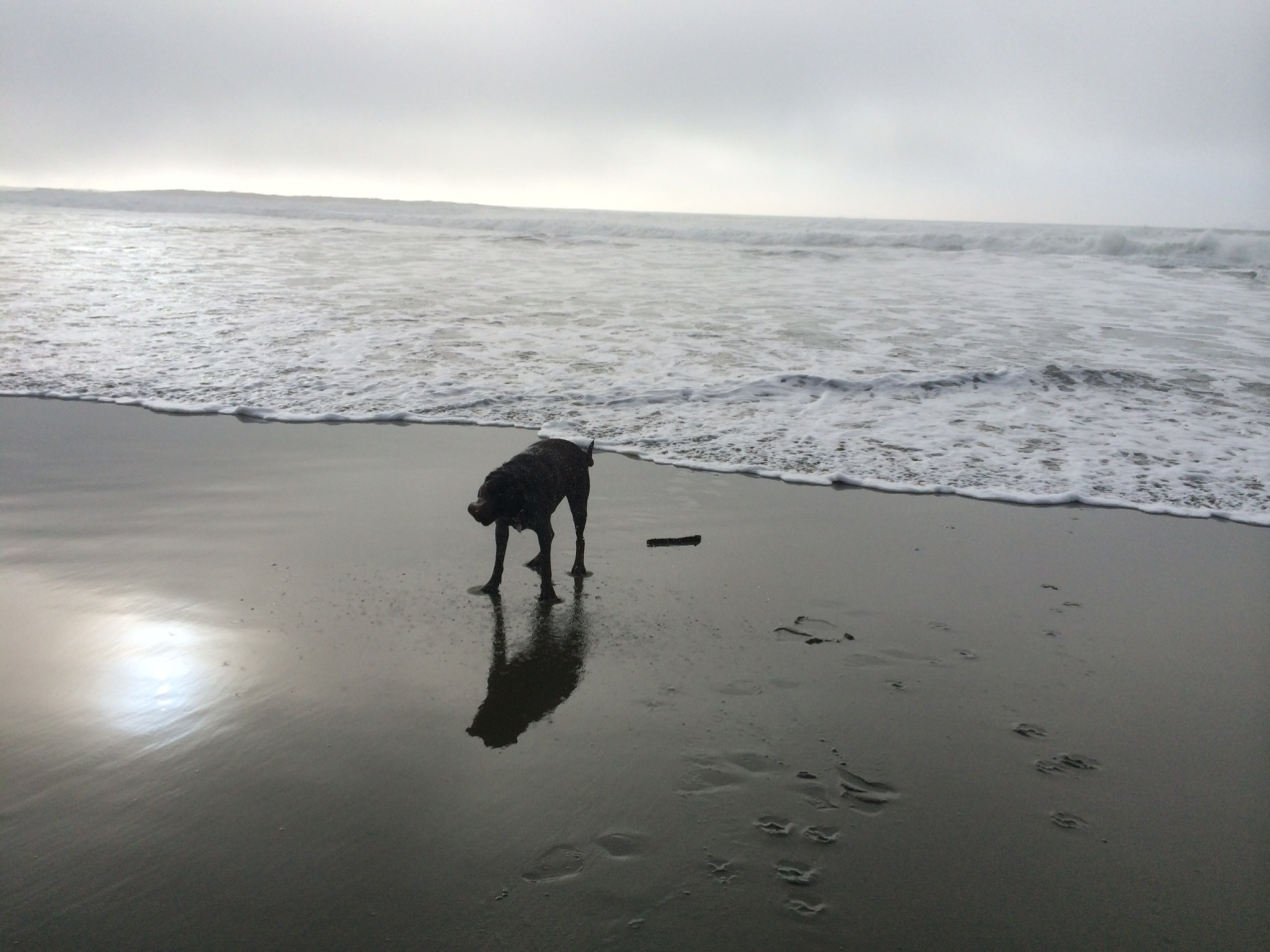 Evening walk on a foggy beach.