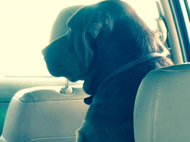jake in the car